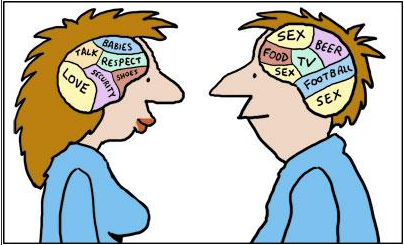 Cartoon of a male and female human brains.